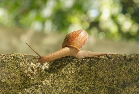 Hermaphrodite: Snail crawling on the concrete Stock Photo