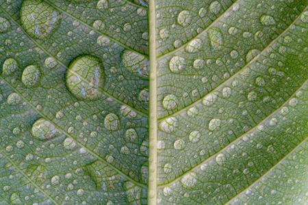 Waterdruppel op groen blad, abstracte macro natte gebladertetextuur, patroon en achtergrond