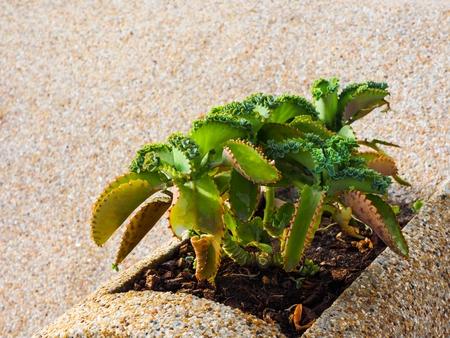 壁の横に土から育った緑の植物
