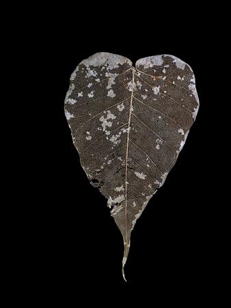 黒の背景に分離された乾燥した葉