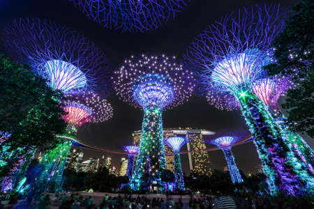 big: big tree in singapore
