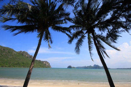 Stylized Two coconut trees and a blue sky in Thailand Stock Photo