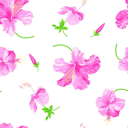 hibiscus flower: Vector hibiscus on white background Illustration