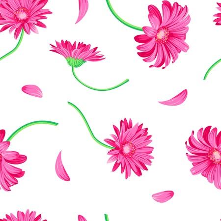 gerbera daisy: Margarita de gerbera rosa en el fondo blanco