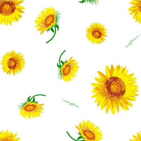 green leafs: Sun flower Vector on the white background