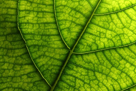 Green Leaves Texture, Close up Stock Photo