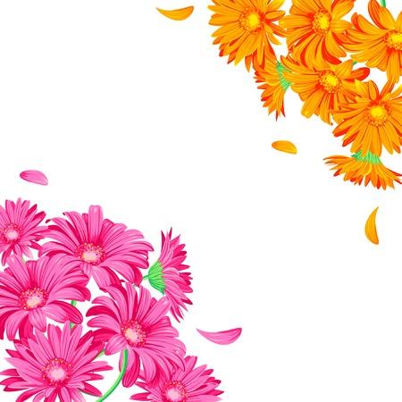 gerbera daisy: Gerbera de color rosa y naranja sobre fondo blanco