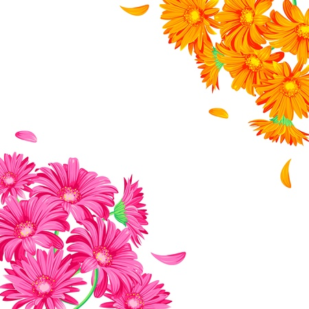 Gerbera pink and orange on the white background