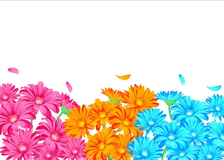 Gerbera pink orange and blue on the white background
