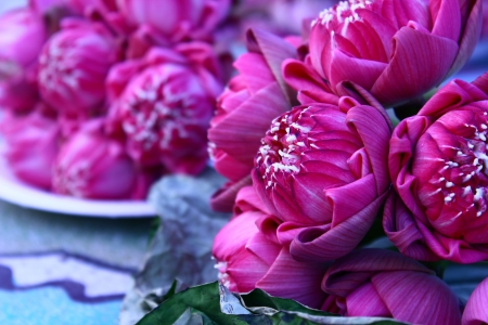 seedpod: lotus flower and seedpod, Beautiful chinese temple, Thailand