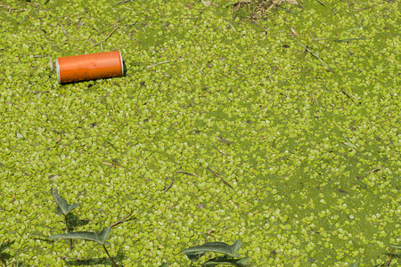 The orange can is floating in the around duckweed