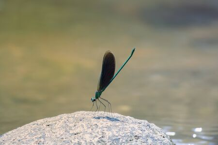 damselfly on the river along the water 스톡 콘텐츠