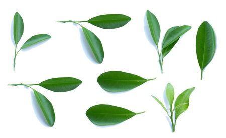 Citrus leaves or lemons on a white isolated background.