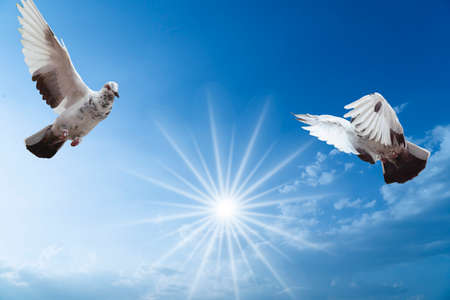 Pigeons flying high above me on sunny day Stock Photo