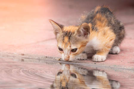 The kitten sat looking at the shadow of herself on the water surface.