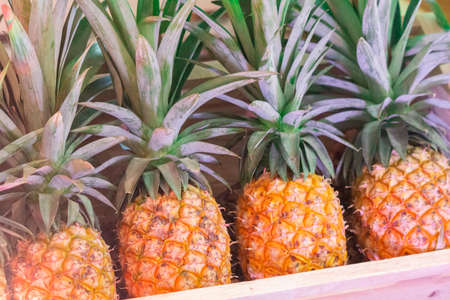Pineapples in pick-up trucks for sale