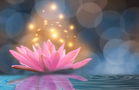 Yellow light lotus Blue background. Banque d'images