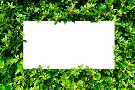 Green leaves nature frame layout and white space for words. Stock Photo