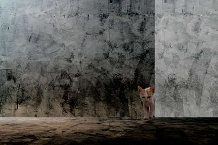 A cute cat, Peeking through a concrete wall. Stock Photo