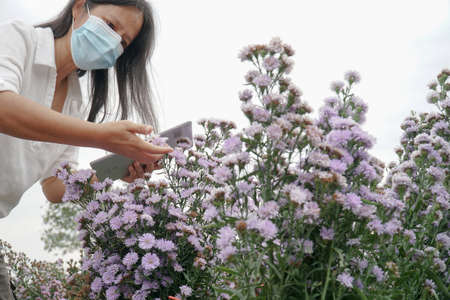 Gardeners checking for pests and diseases in the garden.