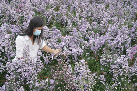 Tablet in the hands of a women,Scientist observing Purple flowers plants. Stock Photo