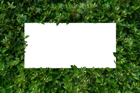 Leaf background And white paper