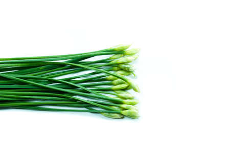 The garlic chives isolated on white background photo