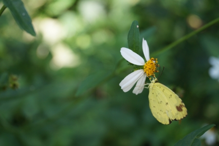 white flower with butterfly photo