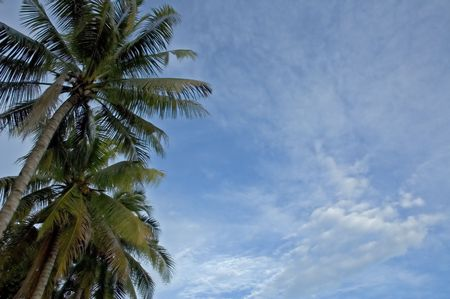 palms and sky background Stock Photo - 317916