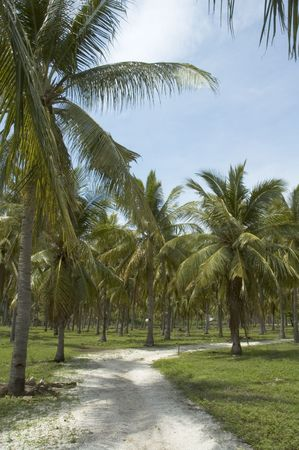 road in palm forest photo