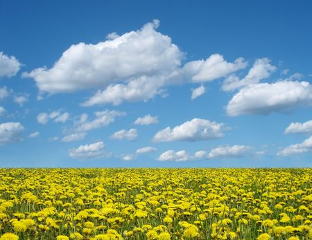 dandelion field and blue cloudy sky photo