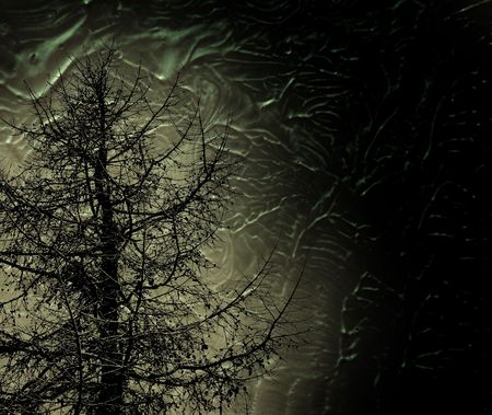 mystic tree in night forest photo