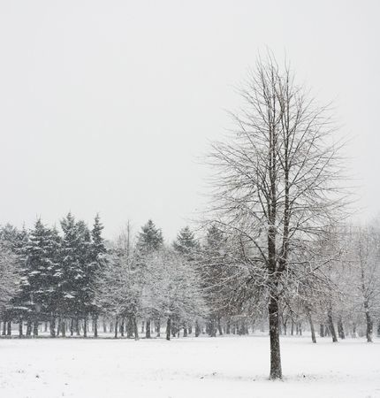 lonely tree in winter forest Stock Photo - 365536