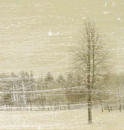 lonely tree in winter forest photo