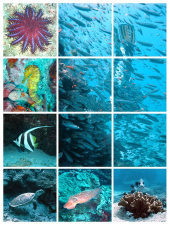 diving - collage of underwater images photo