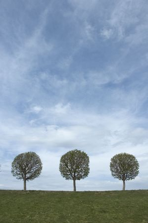 background of sky, grass and trees Stock Photo - 412917
