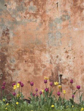 grunge wall with tulips Stock Photo - 412898