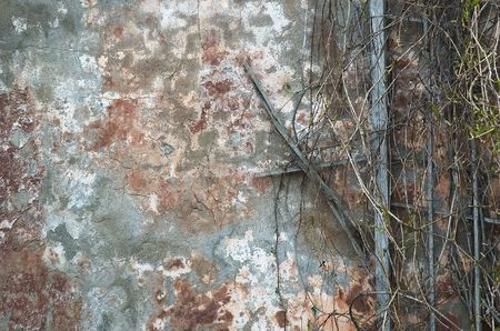 grunge frame of old wall and branches photo