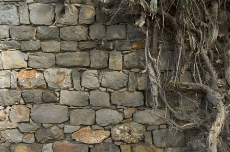 background of ancient wall and roots Stock Photo - 455077