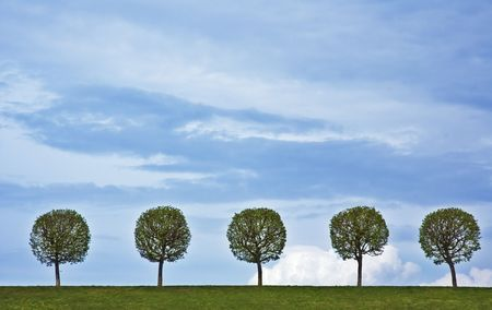 background of 5 trees and blue sky photo