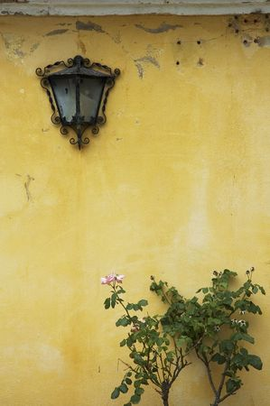 crack house: background of grunge wall, bush and lamp Stock Photo