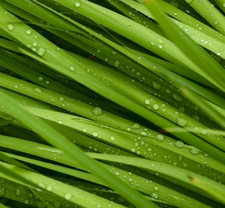 droplets on grass - shallow focus photo