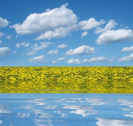 dandelion field reflecting in the water photo
