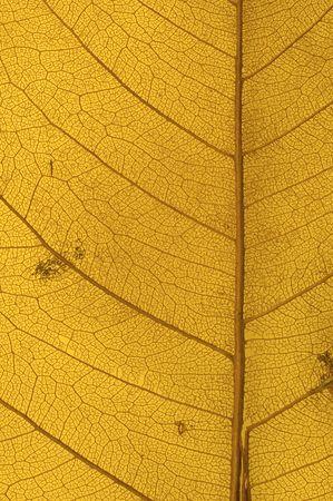 leaf texture Stock Photo - 533095