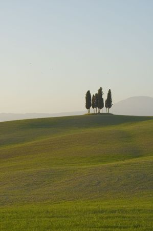 typical: cypress trees on the hill top - typical tuscan landscape Stock Photo