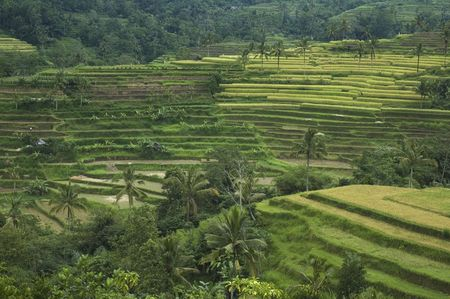 rice terraces, bali, indonesia Stock Photo - 681859