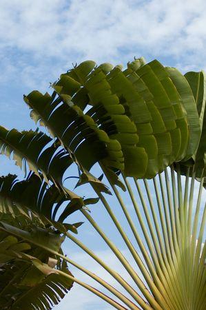 palm over blue sky photo