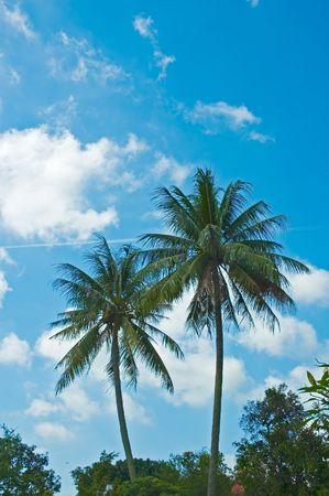 twin palms photo