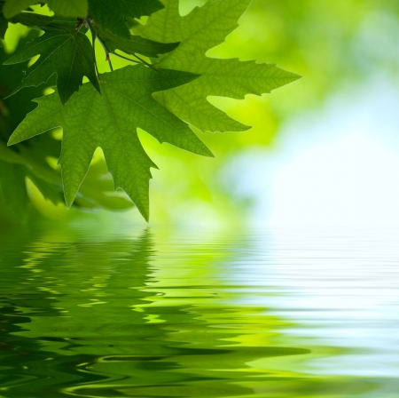 juharfa: green leaves reflecting in the water, shallow focus