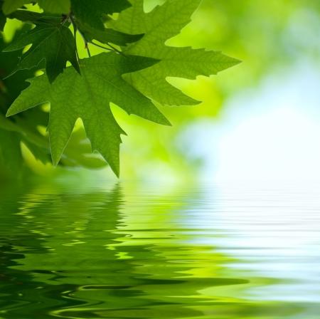 medio ambiente: Hojas verdes que reflejan en el agua, superficial centrarse